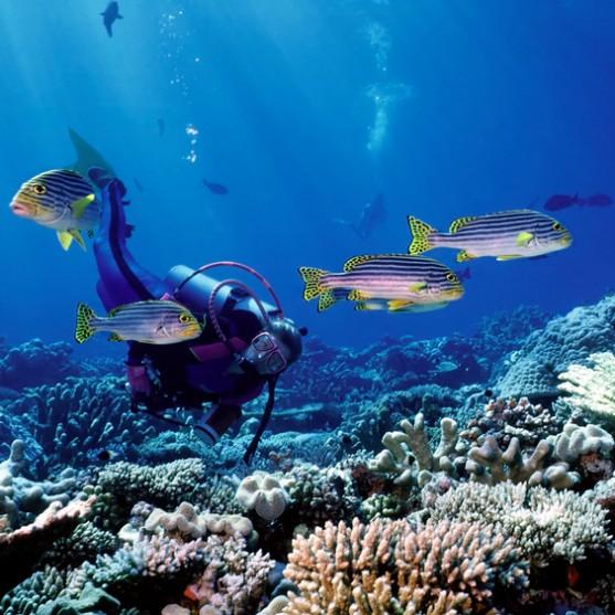 Rødehavet